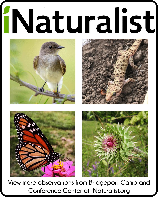 iNaturalist.org